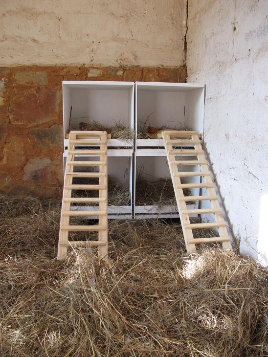 New Laying Boxes At Sanctuary Chicken Rescue And