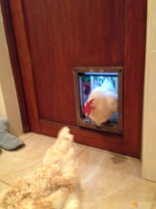 This is a dog hatch. No wait! this is a hen hatch