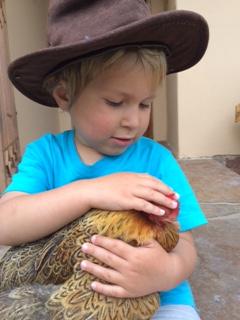 Korlia, Strepies van Leeuwen, Pot Hoender and Herfsie – a month of glorification of the chicken