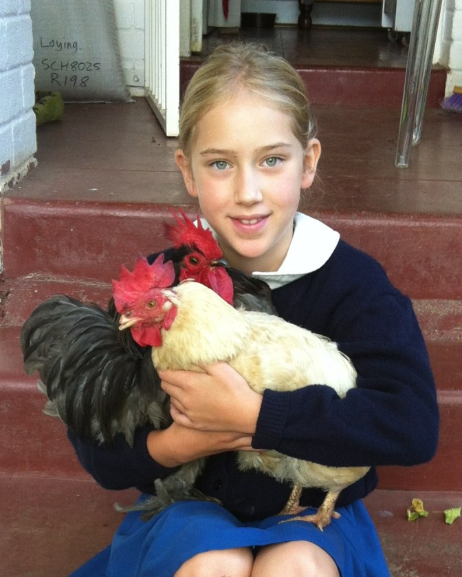 Sophie, Li Li and the rescue girls – a month of glorification of the chicken